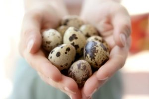 Перепелиные-яйца-полезны-для-потенции