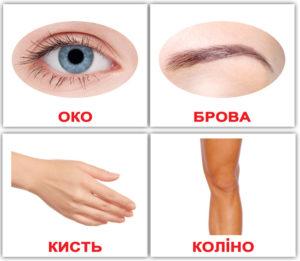 doman-ukr-mini-ludina