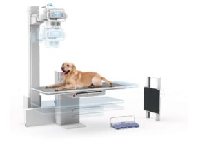 persp-with-dog-veterinary-imaging-guelph-ontario